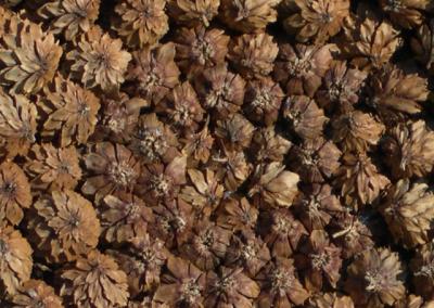 Cones detail